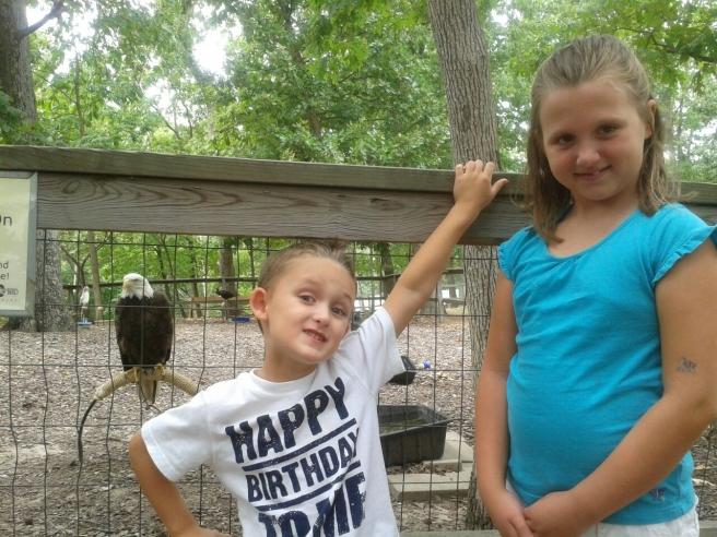 american eagle - world bird sanctuary